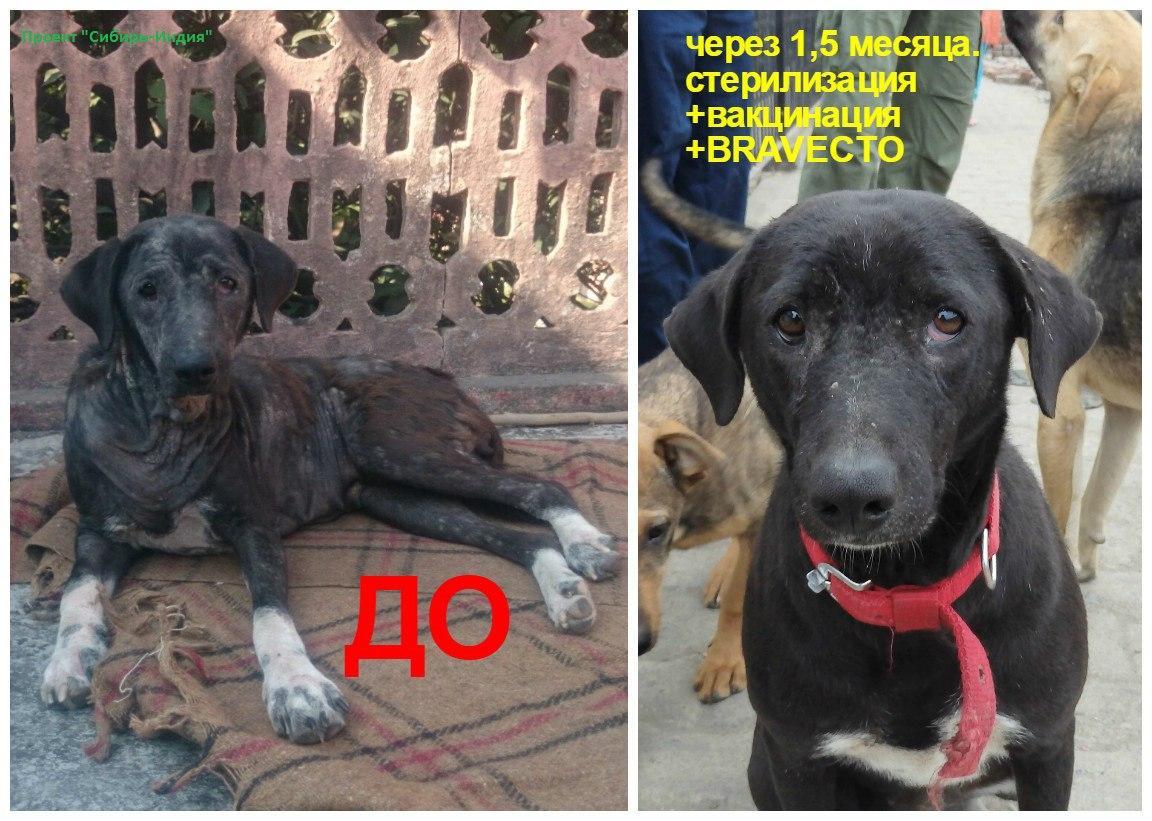 фото «Ад, на который психически здоровый человек не сможет смотреть»: зачем новосибирцы спасают бродячих собак в Абхазии и Индии 10