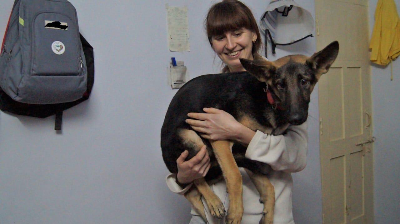 фото «Ад, на который психически здоровый человек не сможет смотреть»: зачем новосибирцы спасают бродячих собак в Абхазии и Индии 18