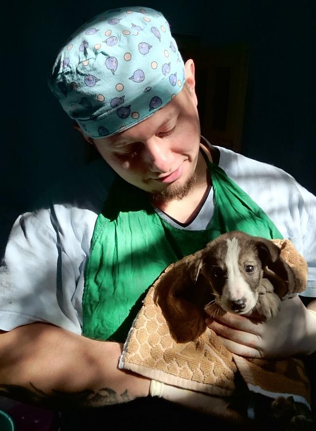 фото «Ад, на который психически здоровый человек не сможет смотреть»: зачем новосибирцы спасают бродячих собак в Абхазии и Индии 2
