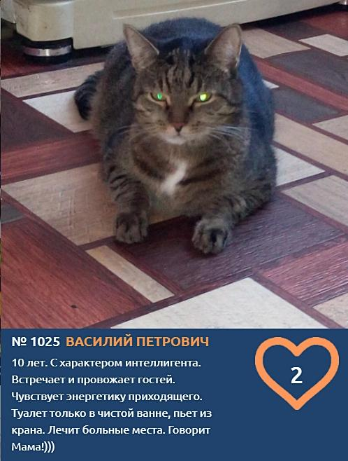 фото Демонически красивые и пугающе прекрасные: топ-10 участников конкурса «Главный котик Новосибирска», способных внушить страх и ужас 3
