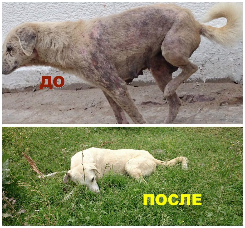 фото «Ад, на который психически здоровый человек не сможет смотреть»: зачем новосибирцы спасают бродячих собак в Абхазии и Индии 11