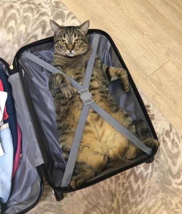 фото Любовь Серого к чемоданам и тяга к воде: что известно о третьем финалисте конкурса «Главный котик Омска» 3