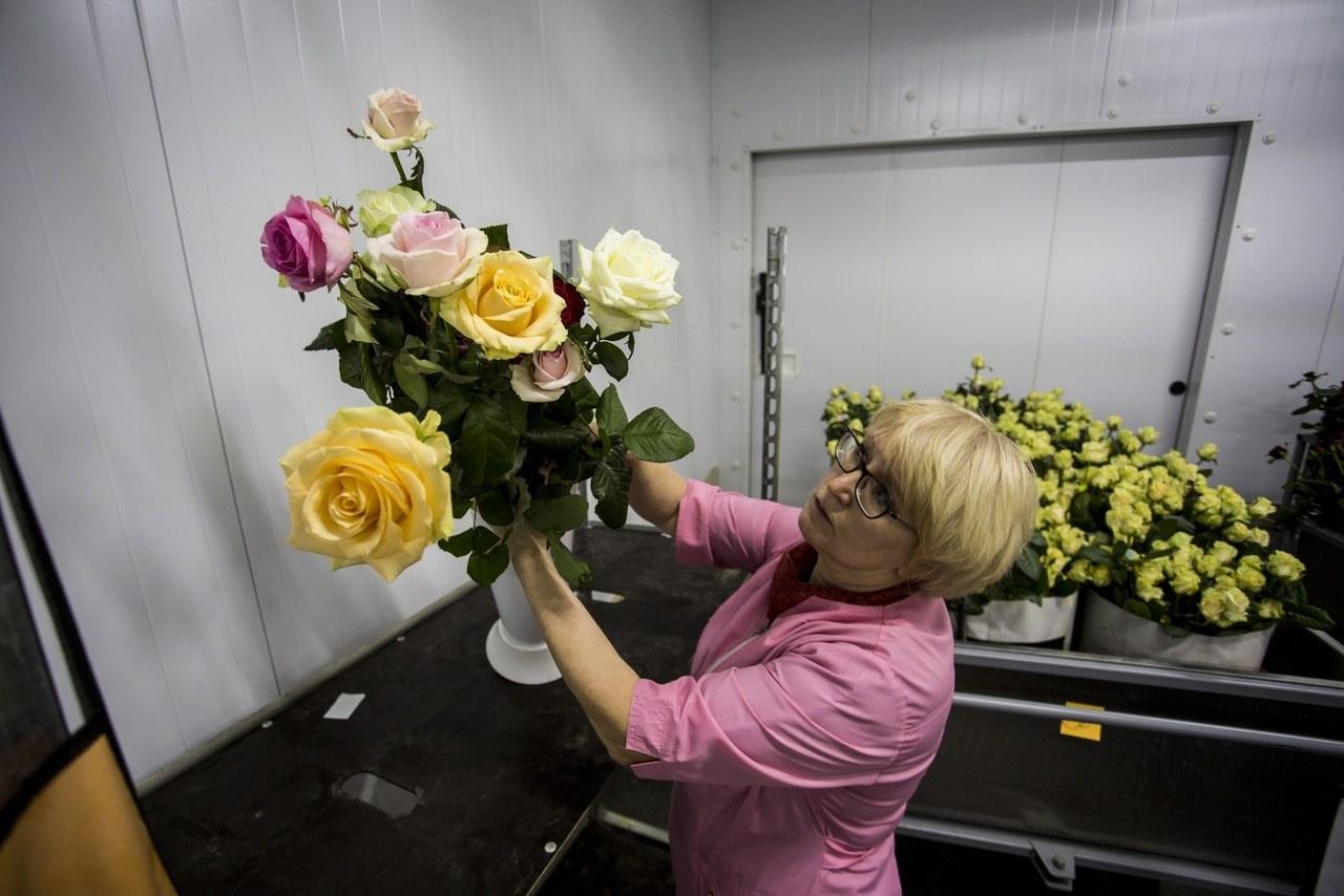 Фото Райский остров в заснеженной Сибири: как выращивают розы в новосибирской теплице и можно ли сделать это на подоконнике 10