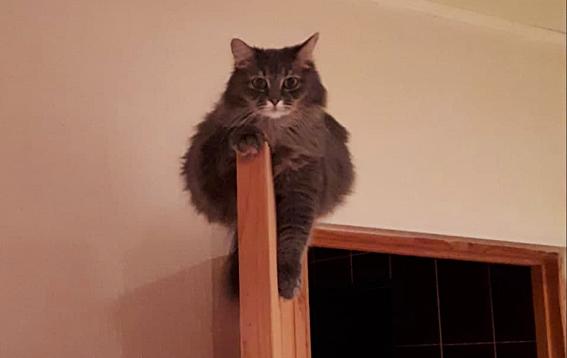 фото Как победить в конкурсе «Главный котик – 2021»: первые финалисты поделились лайфхаками 2
