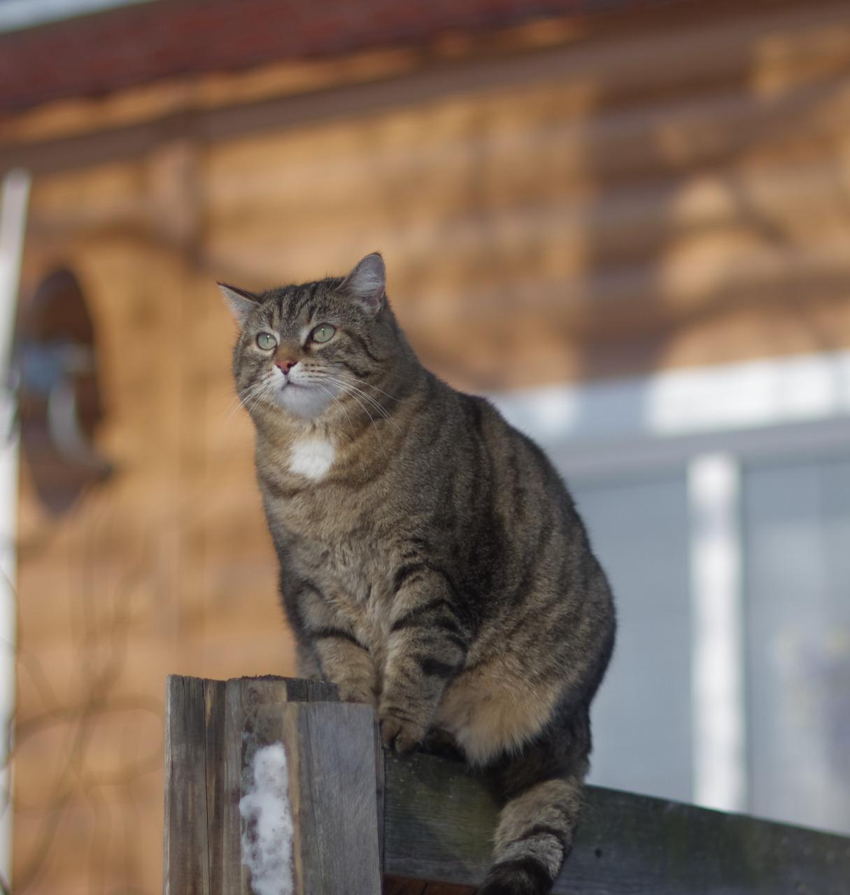фото Вольнолюбивый Веня и спортивный Тиша: что известно о победителях особой номинации конкурса «Главный котик Новосибирска» 2