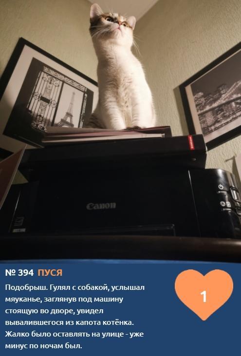 фото Хемингуэй бы прослезился: читаем самые трогательные короткие истории об участниках конкурса «Главный котик Новосибирска – 2021» 2