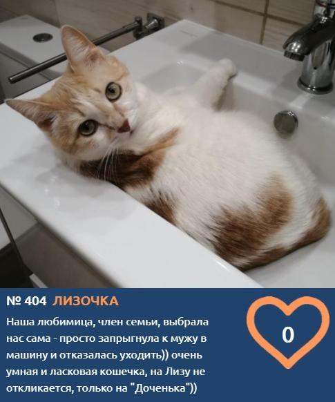 фото Хемингуэй бы прослезился: читаем самые трогательные короткие истории об участниках конкурса «Главный котик Новосибирска – 2021» 3