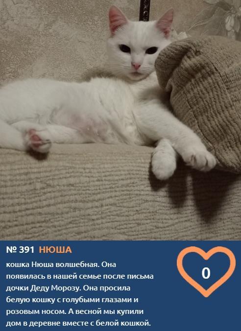 фото Хемингуэй бы прослезился: читаем самые трогательные короткие истории об участниках конкурса «Главный котик Новосибирска – 2021» 4