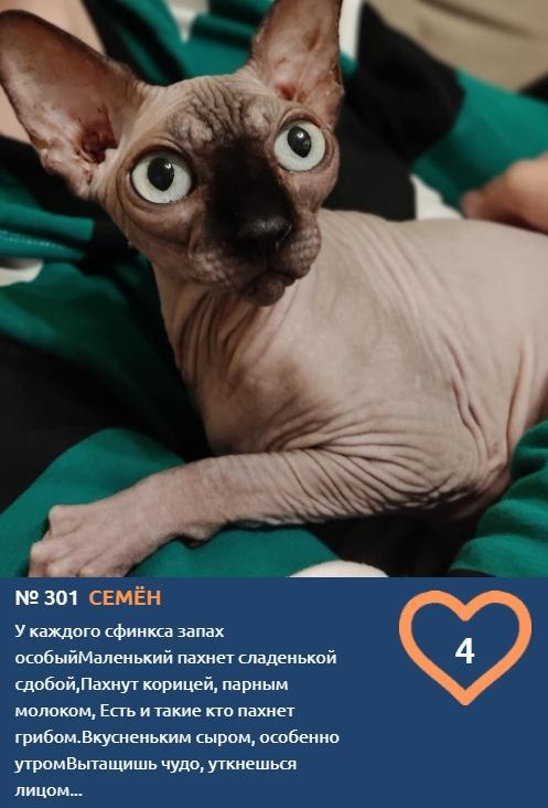 фото Хемингуэй бы прослезился: читаем самые трогательные короткие истории об участниках конкурса «Главный котик Новосибирска – 2021» 6
