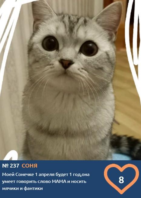фото Хемингуэй бы прослезился: читаем самые трогательные короткие истории об участниках конкурса «Главный котик Новосибирска – 2021» 7