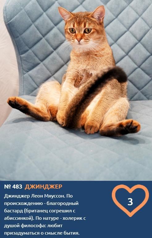 фото Слюнька, Чебупели, Чувак и другие необычные прозвища: топ-40 оригинальных кличек участников конкурса «Главный котик Новосибирска – 2021» 8