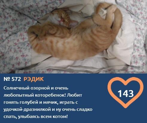 фото Как победить в конкурсе «Главный котик – 2021»: первые финалисты поделились лайфхаками 5