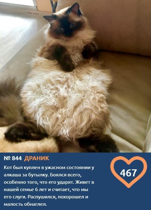 фото Как победить в конкурсе «Главный котик – 2021»: первые финалисты поделились лайфхаками 6