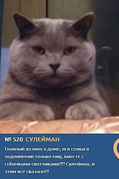 Фото Усатые тяжеловесы: знакомимся с упитанными участниками конкурса «Главный котик Новосибирска – 2021» 10