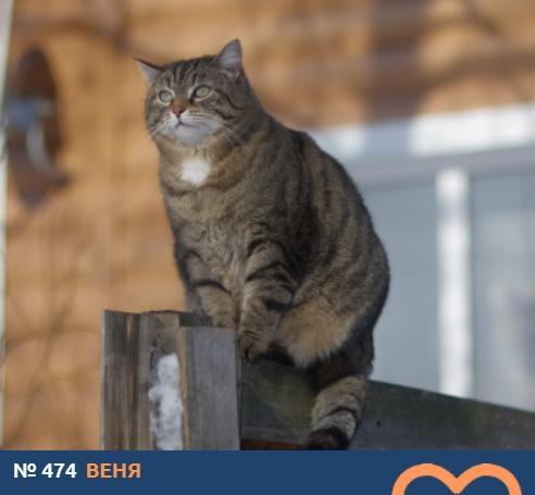 Фото Усатые тяжеловесы: знакомимся с упитанными участниками конкурса «Главный котик Новосибирска – 2021» 12
