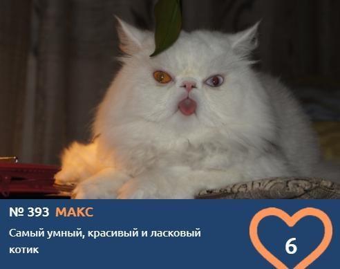 Фото Усатые тяжеловесы: знакомимся с упитанными участниками конкурса «Главный котик Новосибирска – 2021» 16