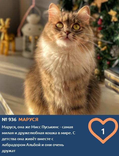 Фото Тигры, которых можно погладить: знакомим с самыми красивыми участниками конкурса «Главный котик Новосибирска» 6