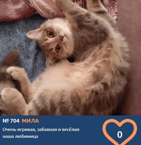 Фото Тигры, которых можно погладить: знакомим с самыми красивыми участниками конкурса «Главный котик Новосибирска» 9