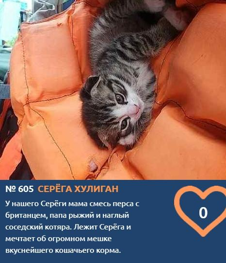 Фото Тигры, которых можно погладить: знакомим с самыми красивыми участниками конкурса «Главный котик Новосибирска» 11
