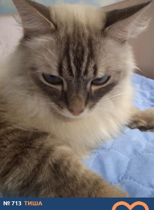 фото Демонически красивые и пугающе прекрасные: топ-10 участников конкурса «Главный котик Новосибирска», способных внушить страх и ужас 6