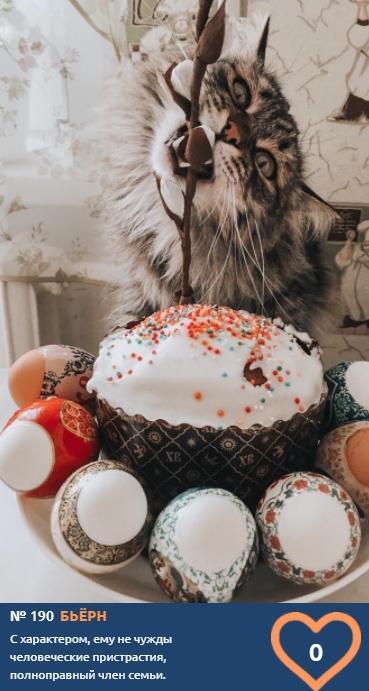 фото Демонически красивые и пугающе прекрасные: топ-10 участников конкурса «Главный котик Новосибирска», способных внушить страх и ужас 9