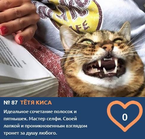 фото Демонически красивые и пугающе прекрасные: топ-10 участников конкурса «Главный котик Новосибирска», способных внушить страх и ужас 11