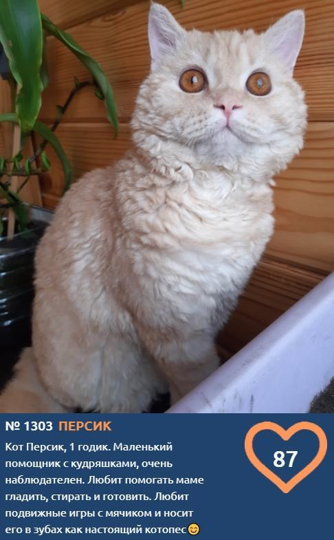 фото Скажите «сыр»: неподражаемые усатые улыбки участников конкурса «Главный котик Новосибирска» 2