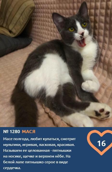 фото Скажите «сыр»: неподражаемые усатые улыбки участников конкурса «Главный котик Новосибирска» 3