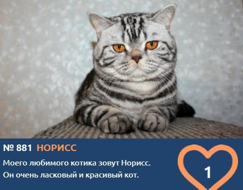 фото Скажите «сыр»: неподражаемые усатые улыбки участников конкурса «Главный котик Новосибирска» 10