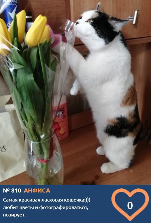 фото Скажите «сыр»: неподражаемые усатые улыбки участников конкурса «Главный котик Новосибирска» 11