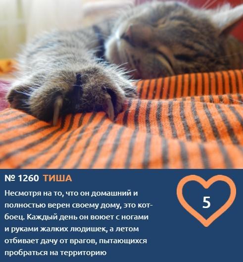фото Вытянуть лапки и кайфовать: учимся отдыхать у участников фотоконкурса «Главный котик Томска» 2