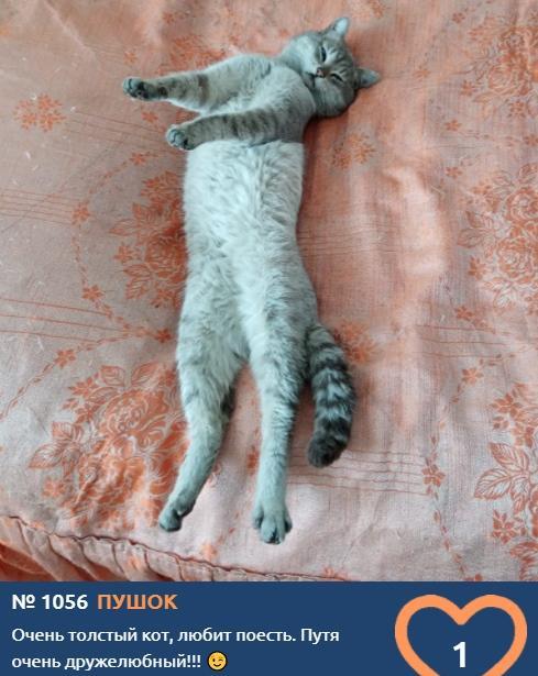 фото Вытянуть лапки и кайфовать: учимся отдыхать у участников фотоконкурса «Главный котик Томска» 4