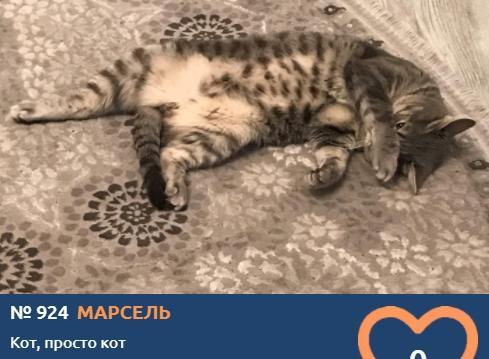 фото Вытянуть лапки и кайфовать: учимся отдыхать у участников фотоконкурса «Главный котик Томска» 7