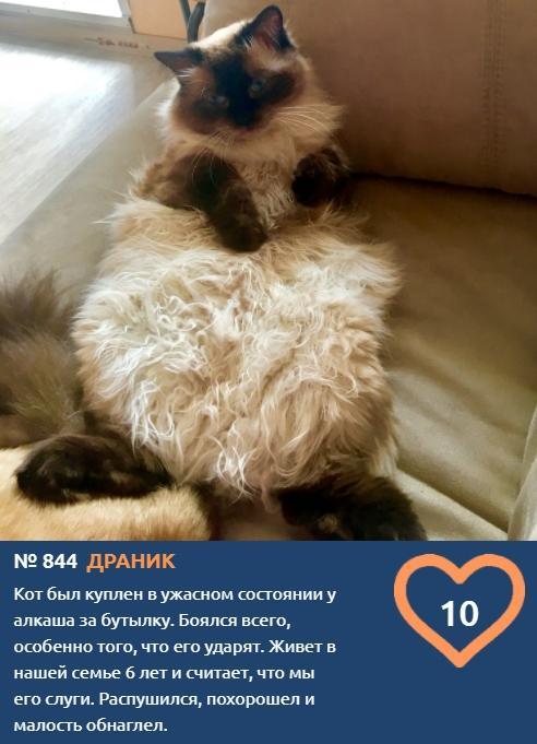 фото Вытянуть лапки и кайфовать: учимся отдыхать у участников фотоконкурса «Главный котик Томска» 11