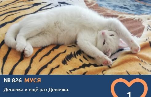 фото Вытянуть лапки и кайфовать: учимся отдыхать у участников фотоконкурса «Главный котик Томска» 12