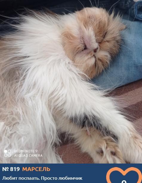 фото Вытянуть лапки и кайфовать: учимся отдыхать у участников фотоконкурса «Главный котик Томска» 13