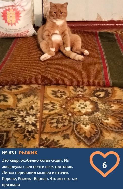 фото Вытянуть лапки и кайфовать: учимся отдыхать у участников фотоконкурса «Главный котик Томска» 16