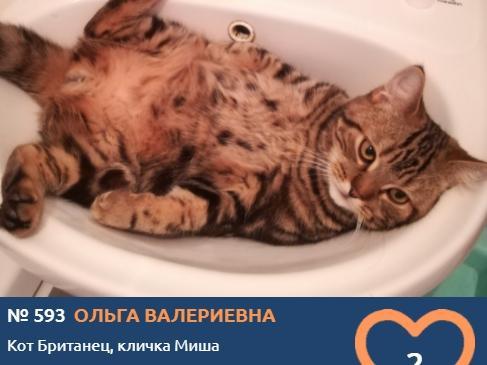 фото Вытянуть лапки и кайфовать: учимся отдыхать у участников фотоконкурса «Главный котик Томска» 18