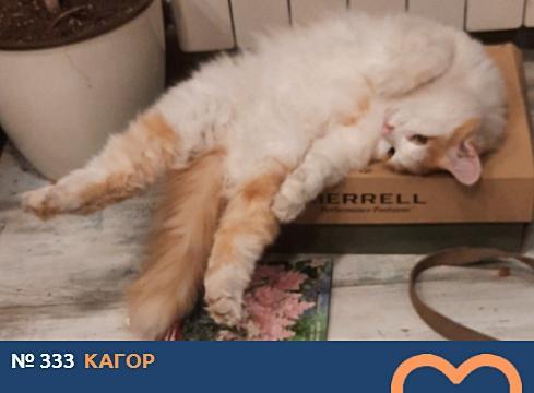 фото Вытянуть лапки и кайфовать: учимся отдыхать у участников фотоконкурса «Главный котик Томска» 21