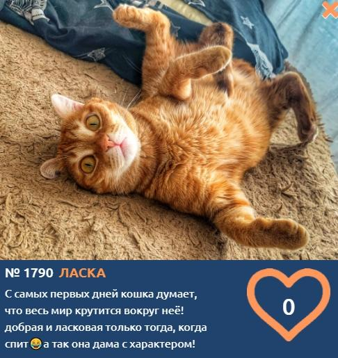 фото Худеем к лету и учимся грации: показываем лучшие позы «кошачьей йоги» от участников конкурса «Главный котик Новосибирска» 6