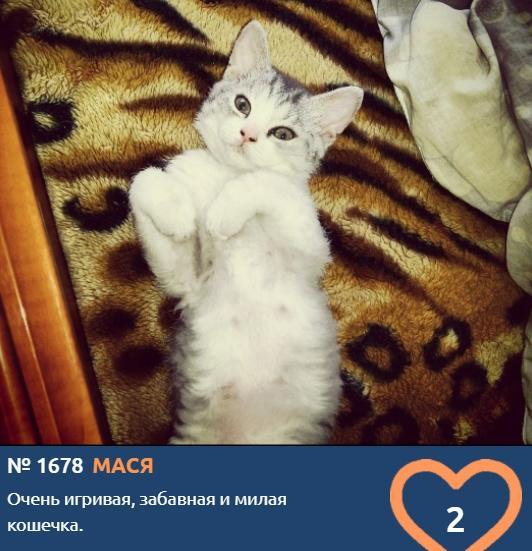 фото Худеем к лету и учимся грации: показываем лучшие позы «кошачьей йоги» от участников конкурса «Главный котик Новосибирска» 9