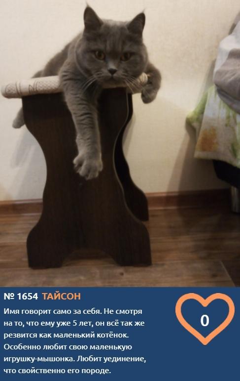 фото Худеем к лету и учимся грации: показываем лучшие позы «кошачьей йоги» от участников конкурса «Главный котик Новосибирска» 8