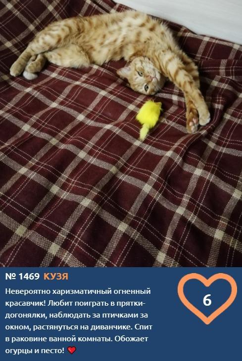 фото Худеем к лету и учимся грации: показываем лучшие позы «кошачьей йоги» от участников конкурса «Главный котик Новосибирска» 4