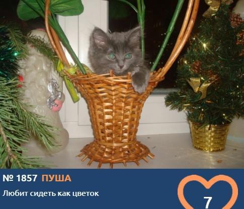 фото Любопытные проказники: публикуем фото конкурсантов проекта «Главный котик Новосибирска» в самых неожиданных местах 2