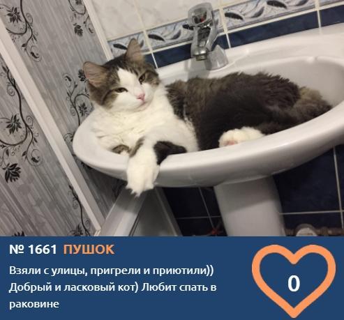 фото Любопытные проказники: публикуем фото конкурсантов проекта «Главный котик Новосибирска» в самых неожиданных местах 5