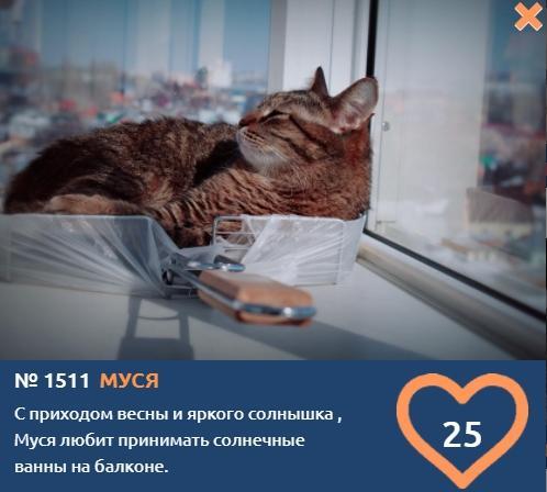 фото Любопытные проказники: публикуем фото конкурсантов проекта «Главный котик Новосибирска» в самых неожиданных местах 14