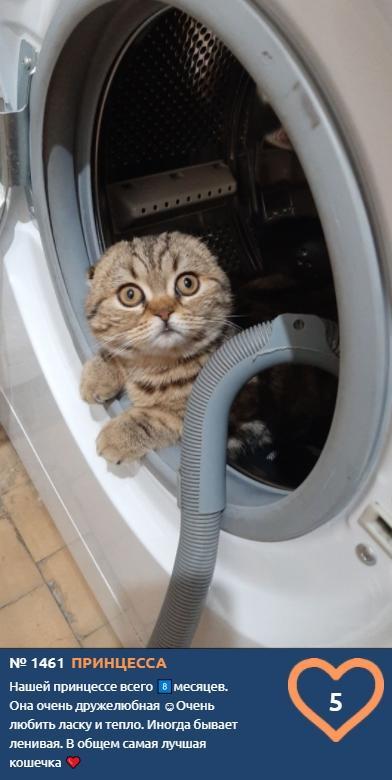фото Любопытные проказники: публикуем фото конкурсантов проекта «Главный котик Новосибирска» в самых неожиданных местах 15