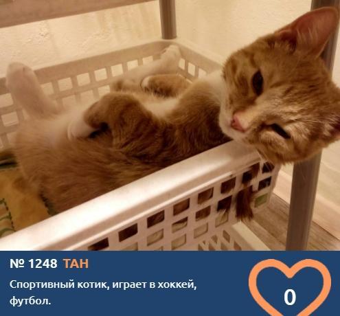 фото Любопытные проказники: публикуем фото конкурсантов проекта «Главный котик Новосибирска» в самых неожиданных местах 13