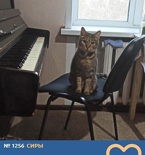 фото Любопытные проказники: публикуем фото конкурсантов проекта «Главный котик Новосибирска» в самых неожиданных местах 17