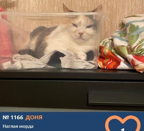 фото Любопытные проказники: публикуем фото конкурсантов проекта «Главный котик Новосибирска» в самых неожиданных местах 18